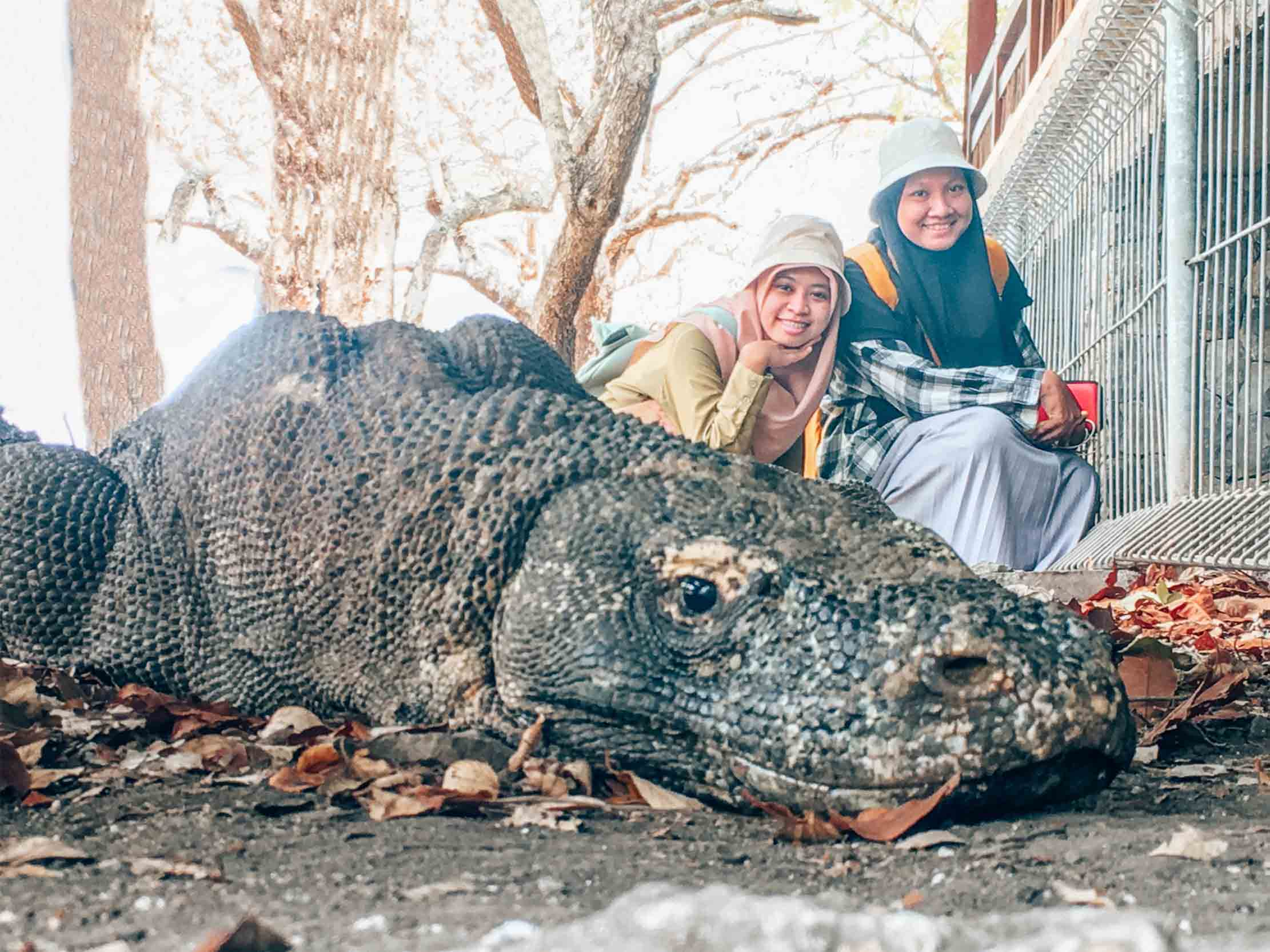 We found you! bapak Komodo. Lucu, tapi buas...