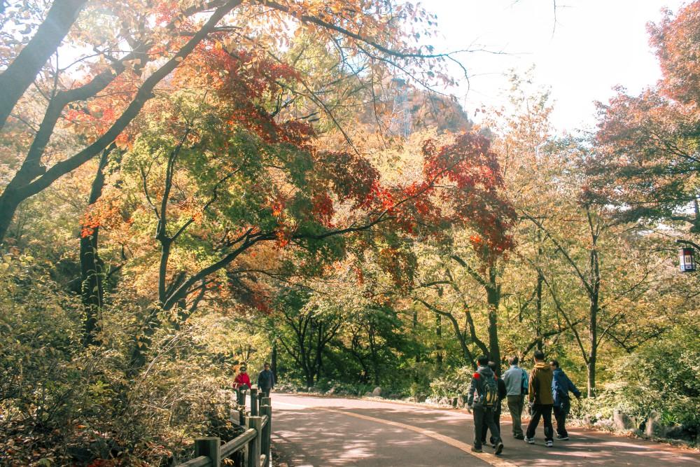 Jalan menuju Namsan Tower sebelum bertemu dengan tangga, mayoritas orang lokal yang sepuh pergi hiking